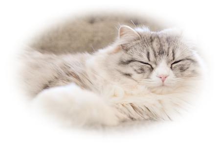 猫のイメージ:PAKUTASO