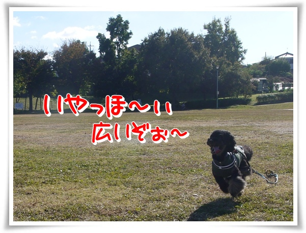 P1110661_1.jpg