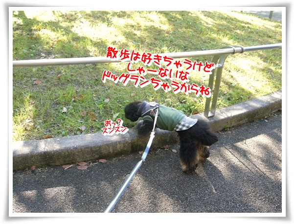 P1110665_1.jpg