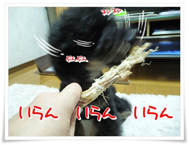 P1120155_1.jpg