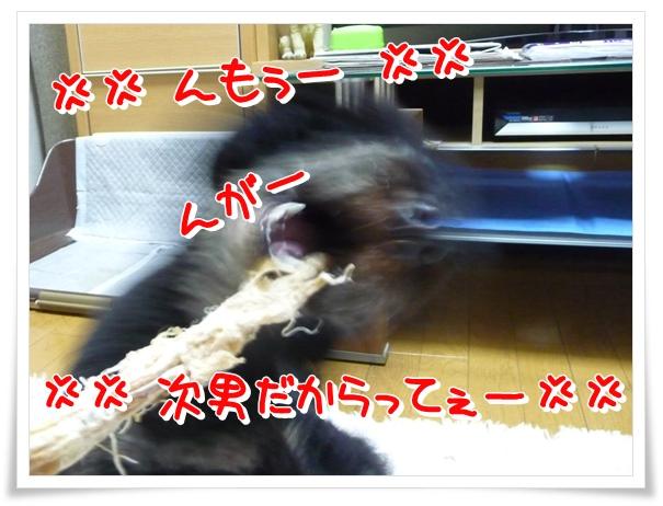 P1120157_1.jpg