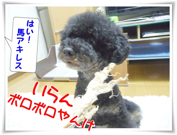 P1120159_1.jpg