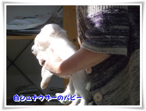 P1120286_1.jpg
