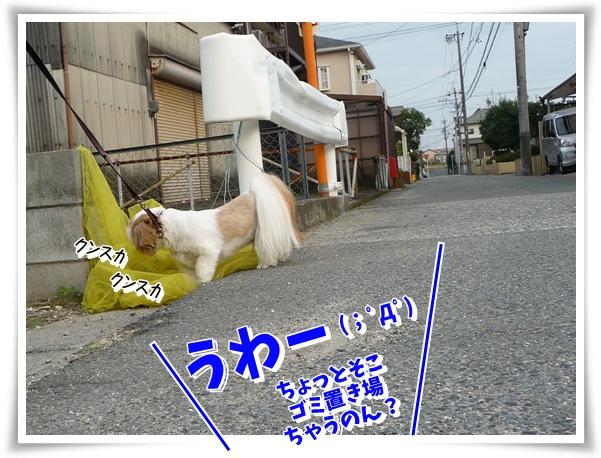 P1120499_1.jpg