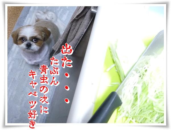 P1120718_1.jpg