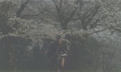 桜舞い散る時、多治見要蔵が突然狂う
