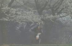 狂った多治見要蔵。鬼となって桜が舞う道を走る