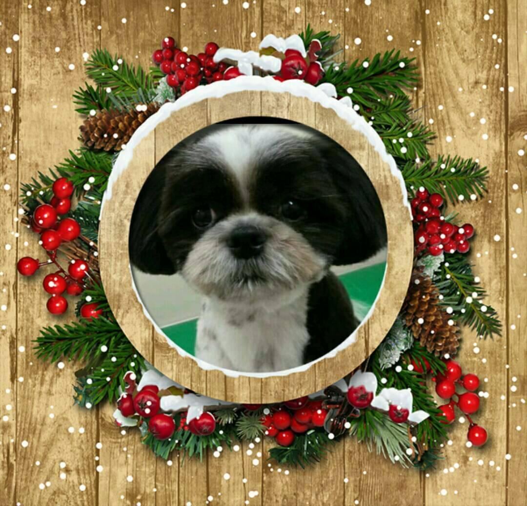 クリスマスの大吉