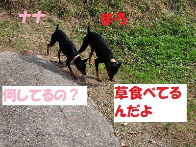 s-ずるずる族 (6)