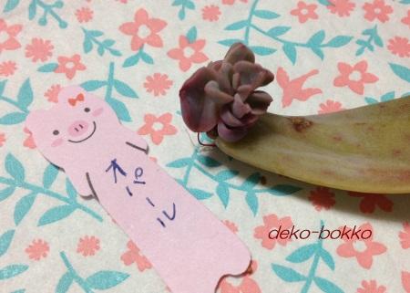renちゃん多肉 オパール