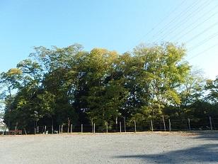 11-6公園f