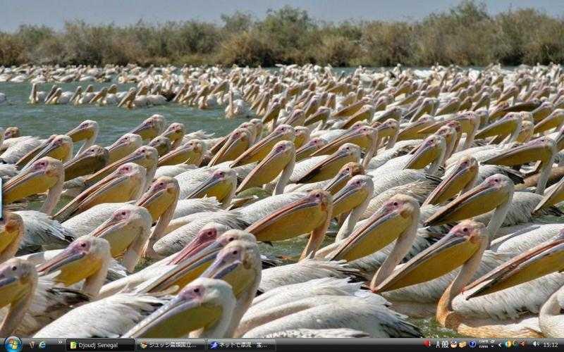 ジュッジ鳥類国立公園 - セネガ...