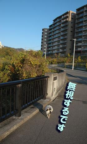 DSC_7091_20151129173030394.jpg