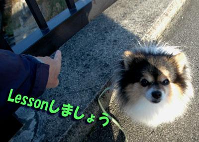 DSC_7184_20151205184943f2b.jpg