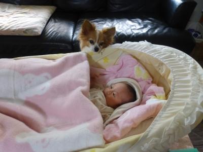 ラミィ乳母とベビー 2015 11・10