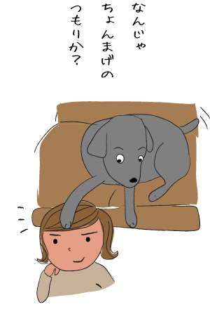 ちょんまげ犬