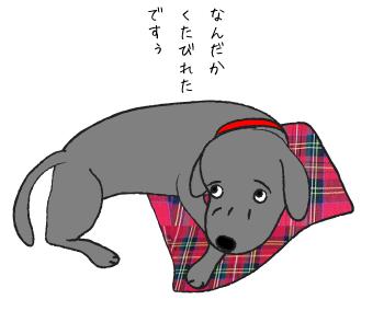 くたびれる犬