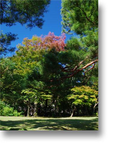 殿ヶ谷戸庭園151003