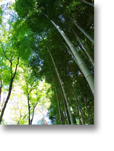 殿ヶ谷戸庭園151004