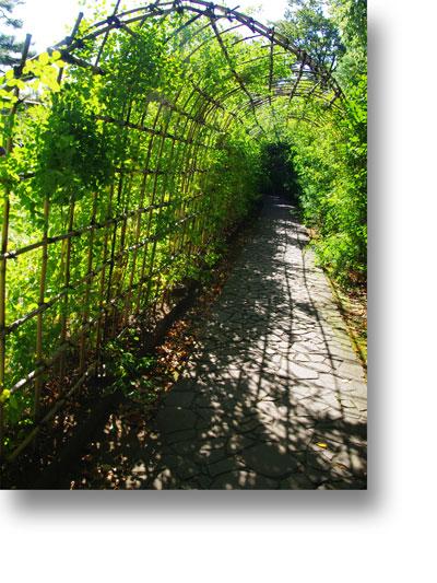 殿ヶ谷戸庭園151006