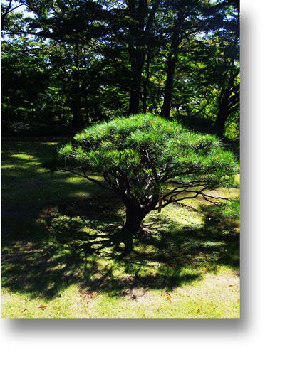 殿ヶ谷戸庭園151007