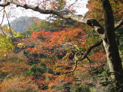 鰐淵寺と旧大社駅 5