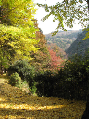 鰐淵寺と旧大社駅13