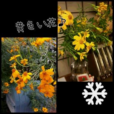 PhotoGrid_1447908204515.jpg