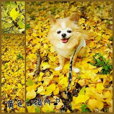 PhotoGrid_1447988160591.jpg
