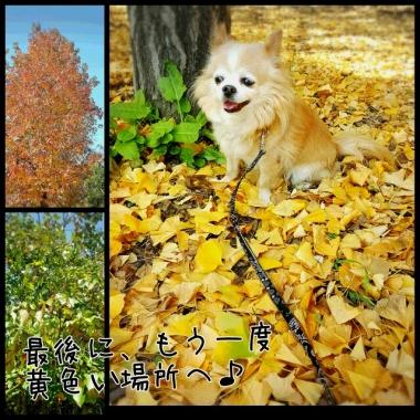 PhotoGrid_1448946081616.jpg