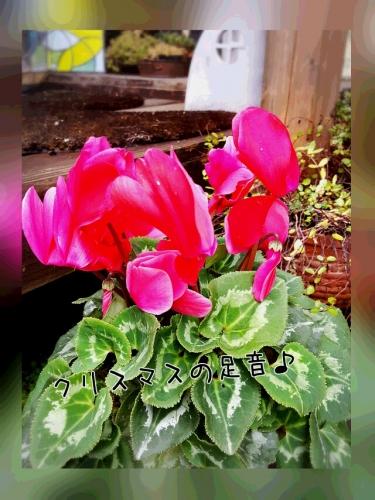 PhotoGrid_1449105777953.jpg