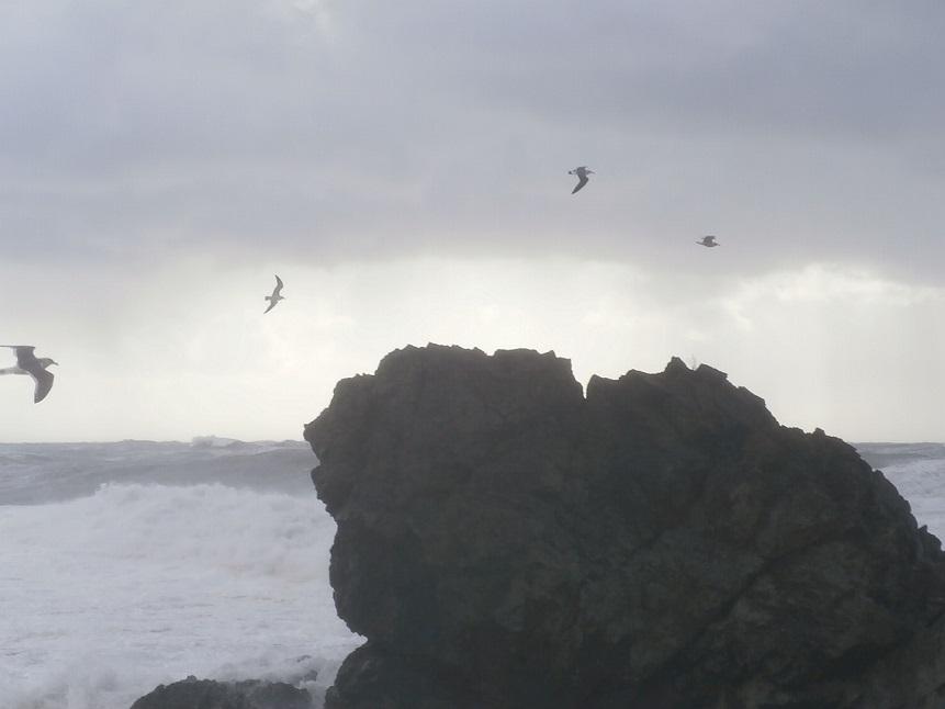 海とカモメ