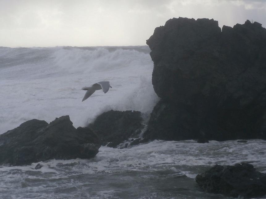 海とカモメ2