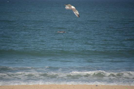 南アフリカ サーフィン(4)
