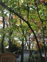151112好古園 (46)