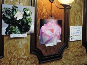 梅島教室写真作品展001