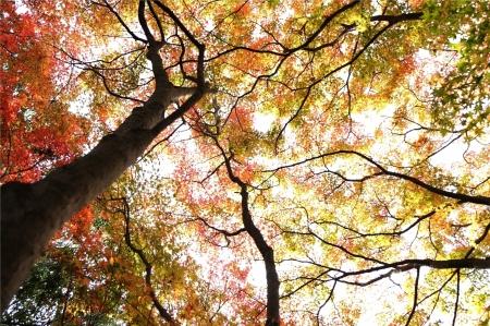 秋色のグラデーション