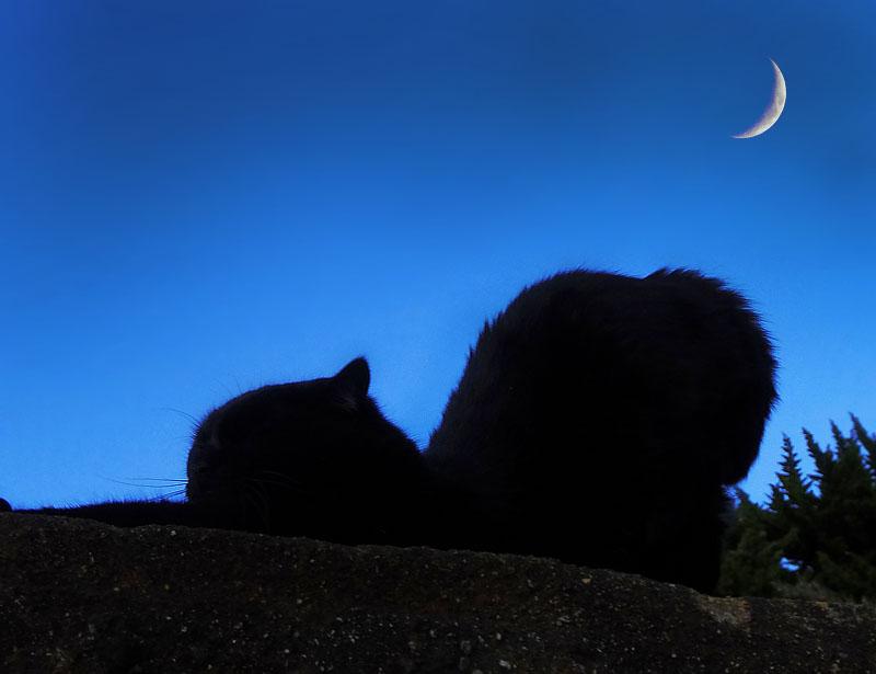 猫と三日月1