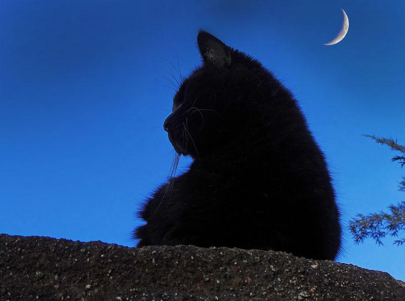 猫と三日月2
