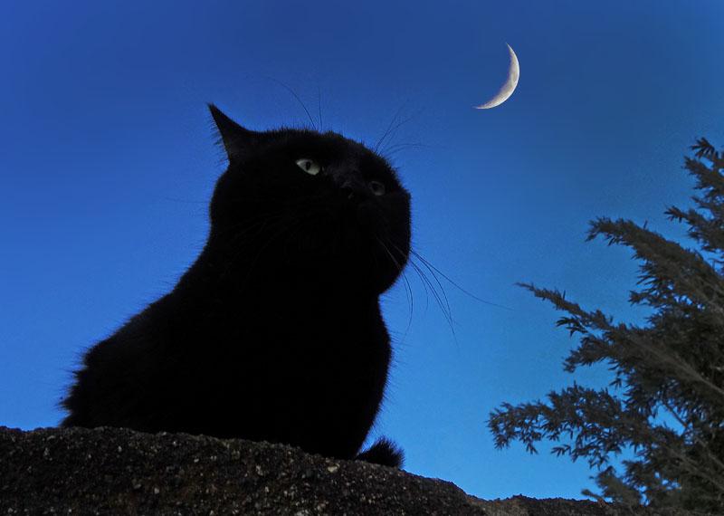 猫と三日月3
