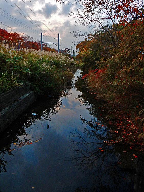 141124横須賀線脇の運河とススキ3