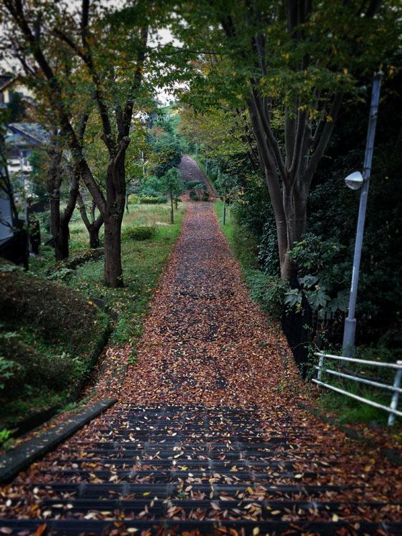 151118 落ち葉の散歩道