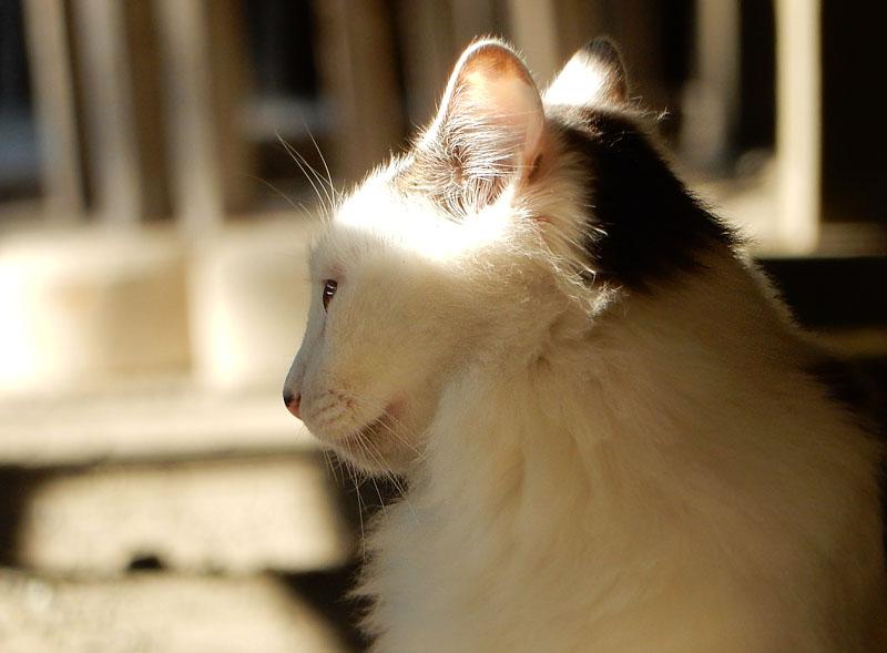 151128称名寺の猫2