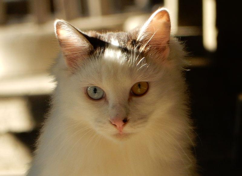 151128称名寺の猫3