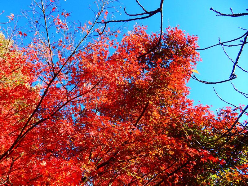 151204昼休みの紅葉狩り2