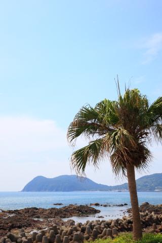 20151103chirimenhashima