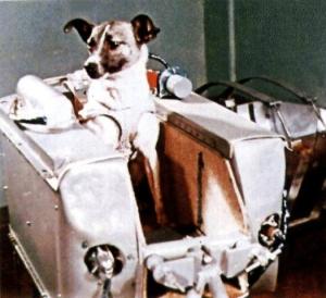 ライカ犬、地球軌道を回る