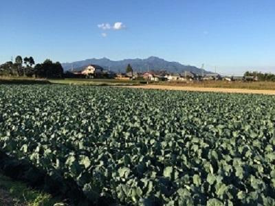 ブロッコリー畑サイズ変更後