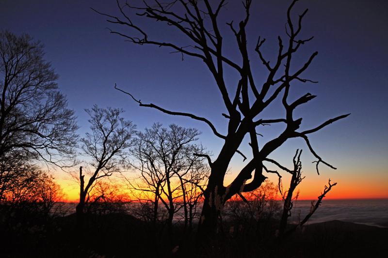 20151105_ブナの森と朝焼け
