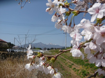 八ヶ岳と桜 山梨の不動産買取り会社アイディーホーム